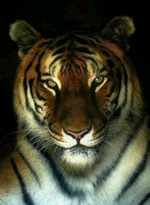 The integrity of soul < Tiger