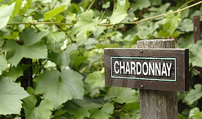 Chardonnay wine pairs with food better than almost any other white wine. Why? It's not a wine of extremes. It's not heavy in acid or tannins but…