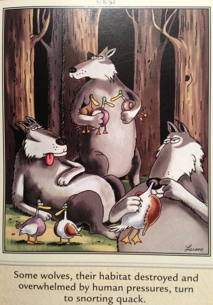 The Far Side by Gary Larson, wolves                                                                                                                                                                                 More