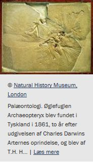 Palæontologi. Studiet af fortidens dyr og planter på grundlag af fossiler. Opslag på Den Store Danske (Gyldendals store online opslagsværk).