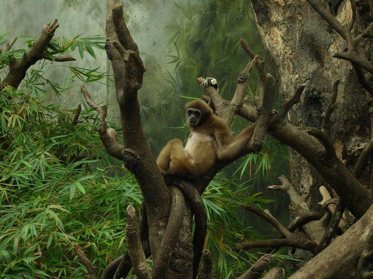 Mammals 6 by hyenacub-stock.deviantart.com on @DeviantArt