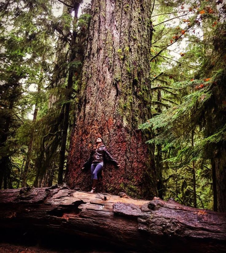Epic trees in Cathedral Grove, Vancouver Island