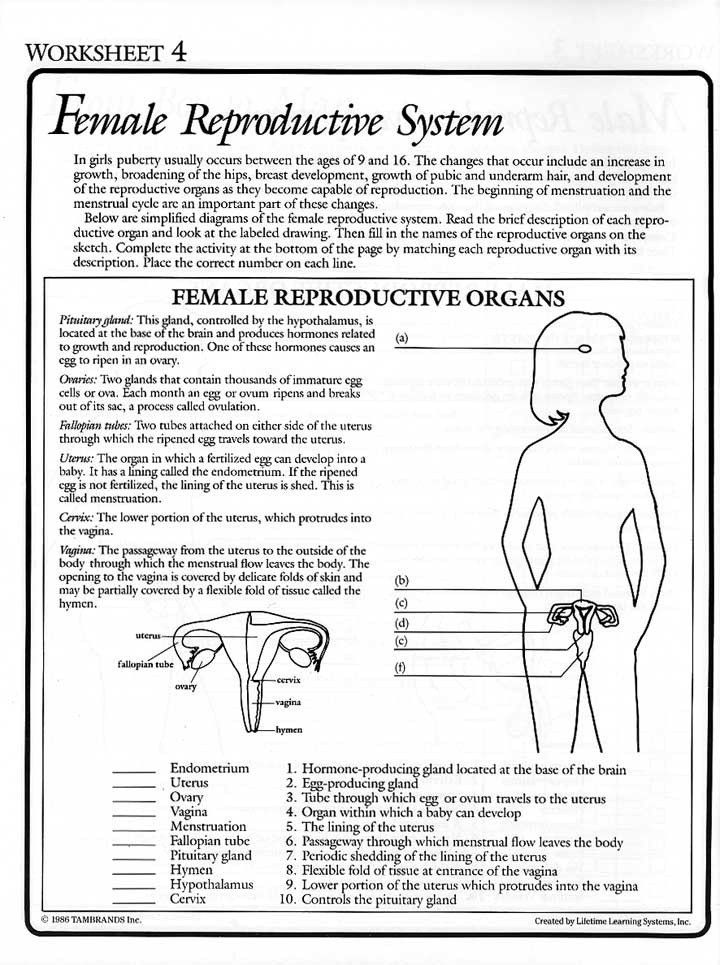 The Female Reproductive System Worksheet From Fiction To Fact 1986 At Mum Reproductive System Lesson Female Reproductive System Reproductive System