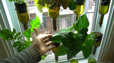 Window Gardens: 12 Fresh Ideas for Growing Food Indoors