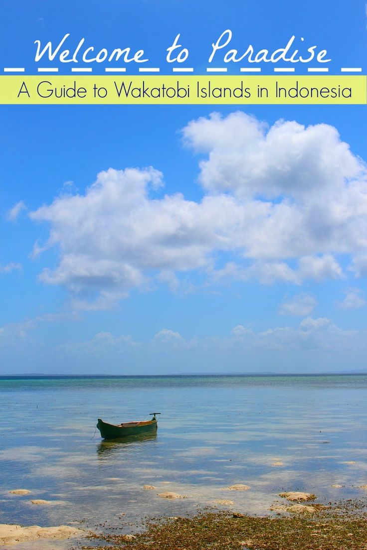 Guide to The Best of Wakatobi Islands in Indonesia