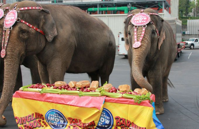 Ringling Brothers Circus to Give Elephants an Early Retirement | Complex