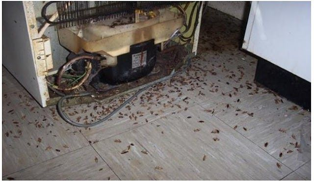 Hama di rumah terdiri dari rupa-rupa binatang. Antara lain kecoa nyamuk tikus lalat semut. Mana yang paling mengganggu Anda?  Tentu tak ada pengecualian mengingat semuanya berdampak buruk pada kesehatan Anda sekeluarga. Yang menjadi permasalahan tak semudah itu membasmi hama-hama tersebut. Mereka dengan mudah ditemui di sudut rumah dapur kamar mandi kolong tempat tidur dan banyak lagi.  Kecoa misalnya karena mudah beradaptasi maka hewan ini termasuk sulit diusir di satu tempat saja.  Jika…