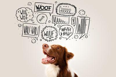Kuuluuko koirasi niihin, jotka riemastuttavat reagoimalla ovikellon ääneen? Ovikellolle tai koputukselle haukkuminen on normaalia ja yleistä ja sehän on kai koiran tehtäväkin; ilmoittaa, että jotain outoa on tekeillä. Vieraat eivät aina arvosta tuulikaapissa haukkuvaa koiraa, ja tilanne on omiaan nostamaan