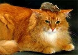 Cats: A Bad Cat Day In Funny Pictures