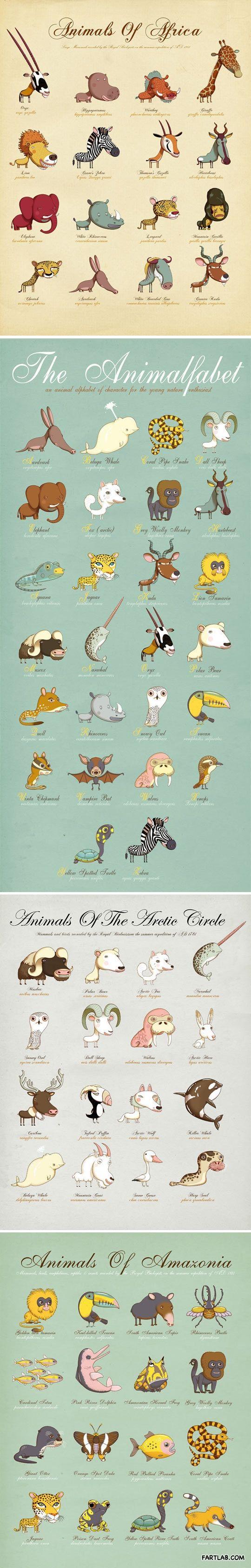 Animals around the world…