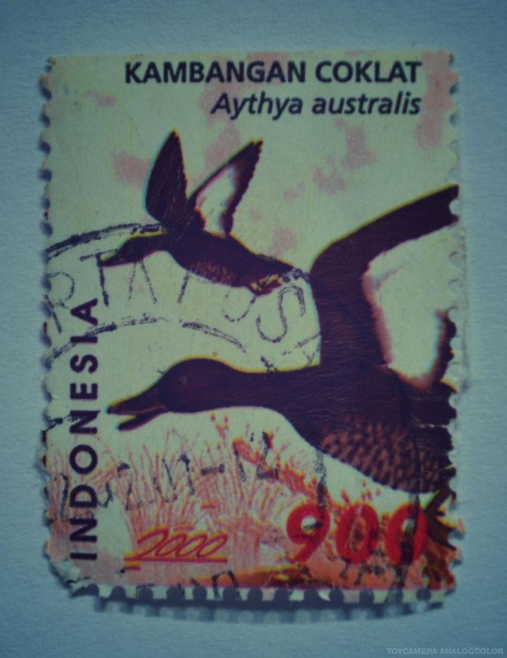 perangko Kambangan Coklat tahun 2000 (Rp 900)