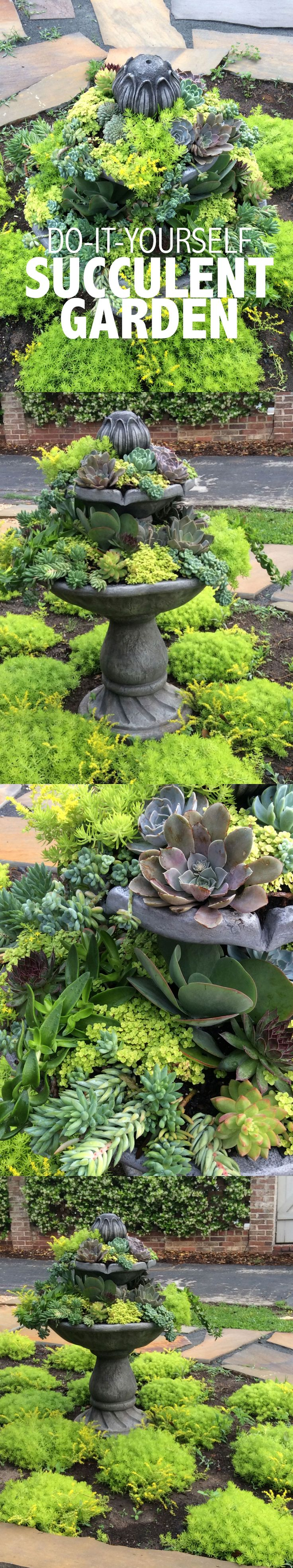 DIY Succulent Garden - Normally I'm not much of a fan of succulents - especially lots, but this is really pretty.
