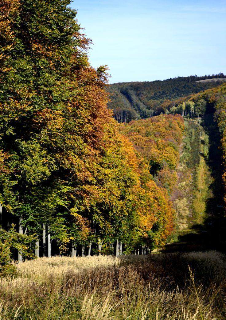 Autumn /Kőszeg forest/ Hungary Foto by Vadász Péter