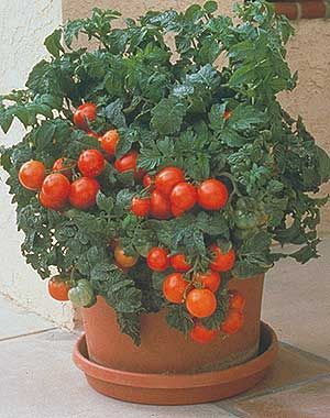 Container gardening. Useful article.