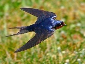 Ötlet-tár szeptember második hete 2. variáció - Napról napra óvoda - Kisasszony napja (költöző madaraink)