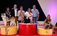 L'élection du plus beau chien de France a eu lieu à Narbonne
