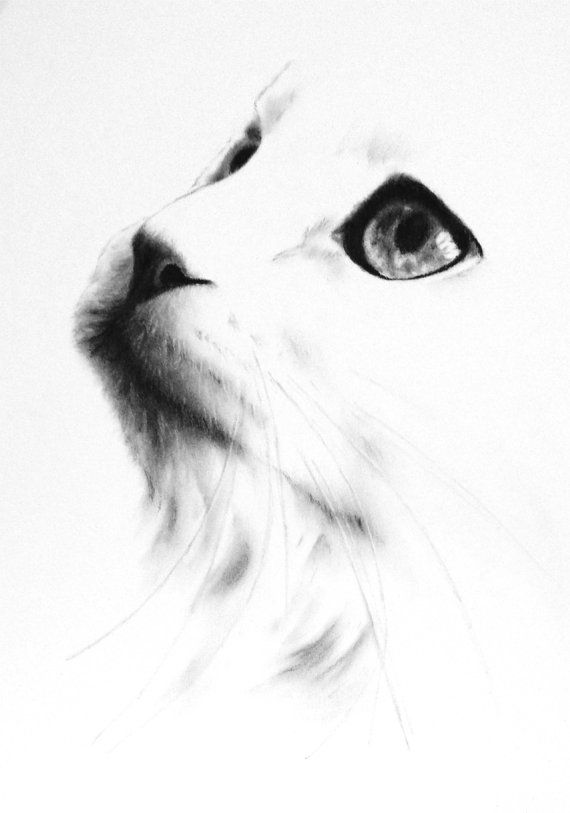Charcoal Cat Drawing ORIGINAL White Cat Sketch by JaclynsStudio