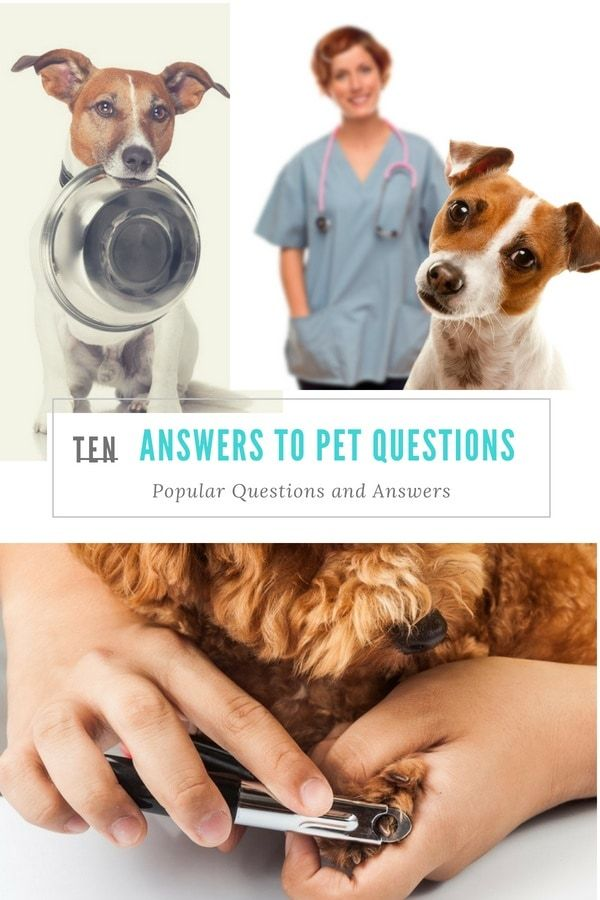 10 Answers To Your Dog Questions Dog Nutrition All Natural Dog