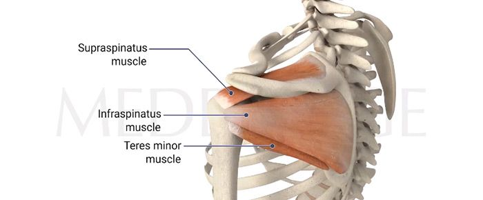 Shoulder Pain Dissected: The Rotator Cuff - by Albert Gee, MD