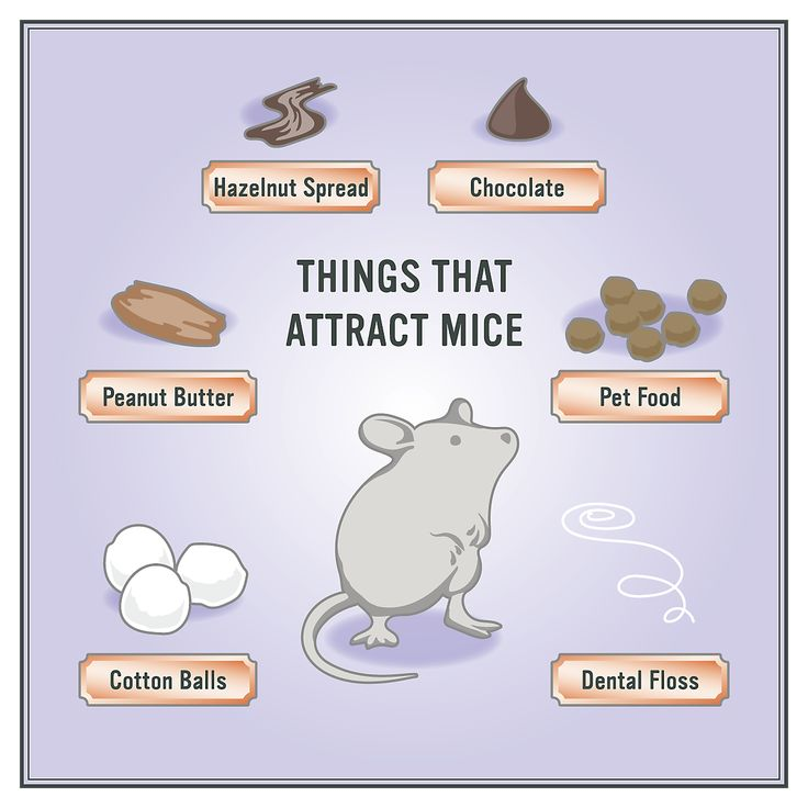 How To Get Rid Of Mice In Walls Get Mice Out Of Walls And Air D Getting Rid Of Mice Getting Rid Of Rats Catch A Mouse