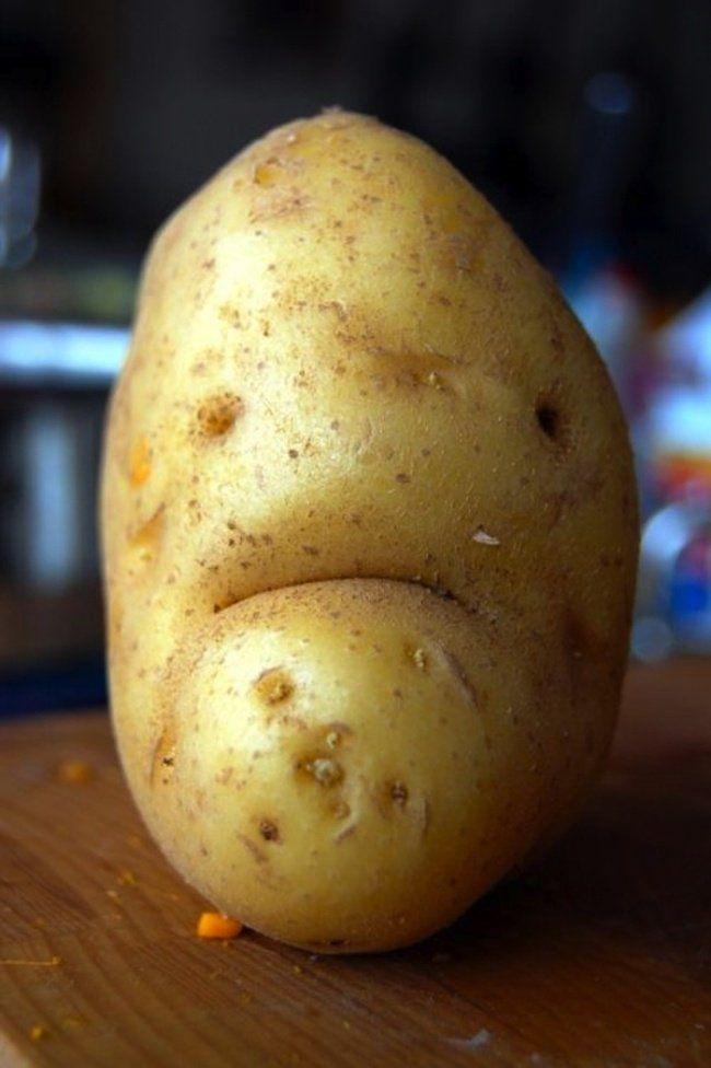 Cette pomme de terre, qui ne veut pas finir en frites