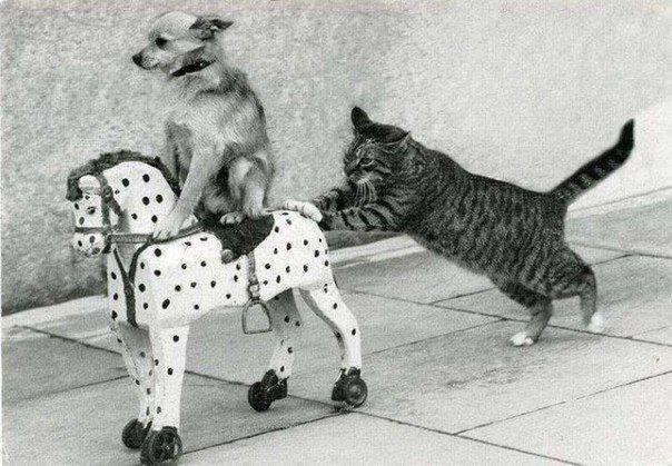 Wie immer machen die Katzen die Arbeit :P