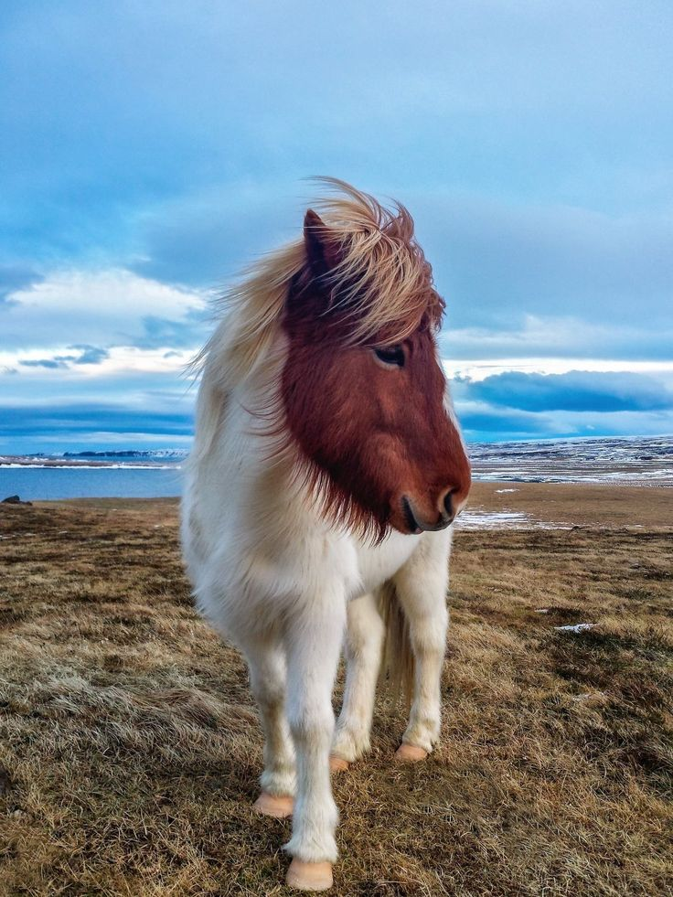 beautiful photo of a charming little horse