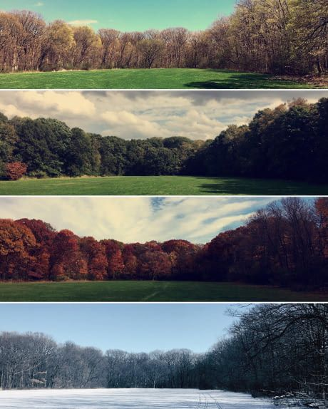 I've been going to this forest preserve every day during my work break for a year. Decided to capture the 4 seasons there. Des Plaines, IL