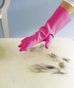 Cleaning Up Dog Hair With Just A Rubber Glove