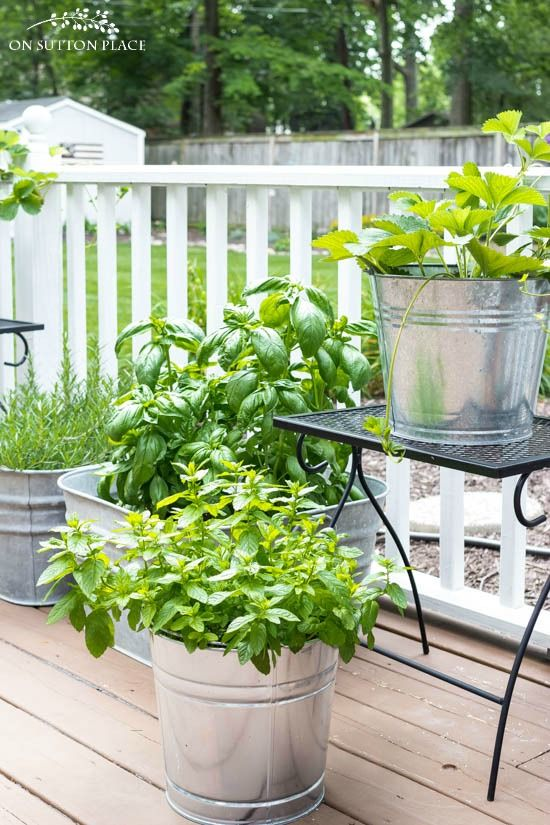 Midsummer Container Herb Garden | Grow herbs and vegetables on a deck or patio. Garden watering tips, growing tomatoes in containers, strawberry plants.