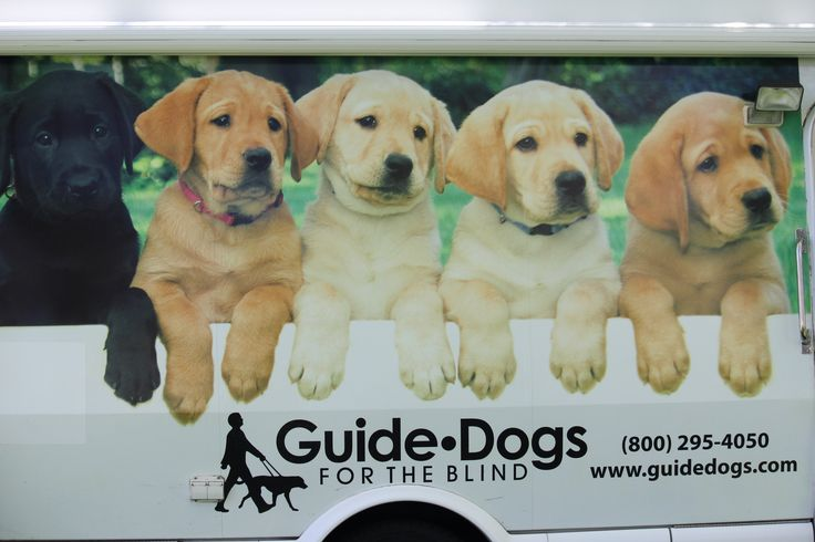 guide dogs for the blind inc