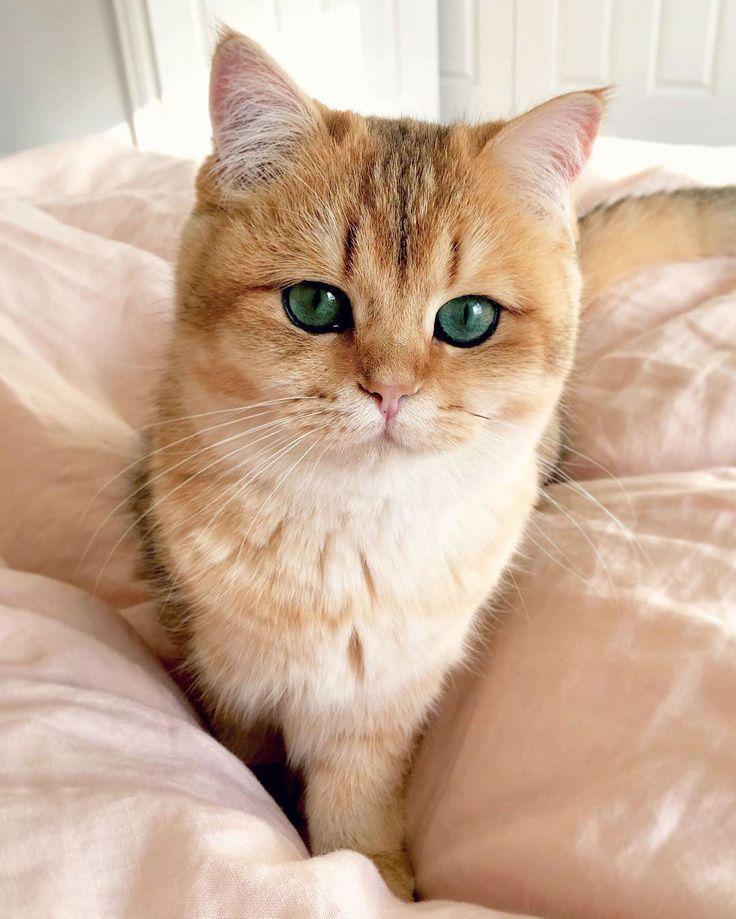 Those eyes are enchanting.