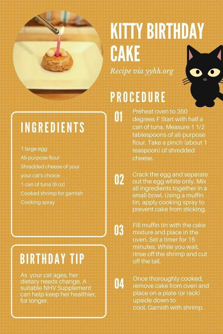 5 Tips For Your Children To Have Healthy Teeth And Gums Homemade Cat Food Cat Treats Homemade Birthday Cake For Cat