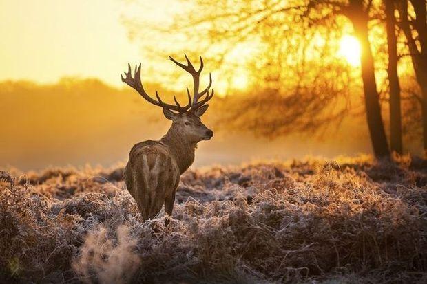 Een wildsafari onder leiding van een boswachter, wandelen met een ezeltje of wandelen tussen kunst: tien aparte wandelingen in België, Nederland, Frankrijk en Duitsland.