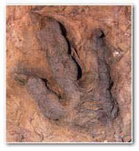 Dino Tracks, St George, Utah