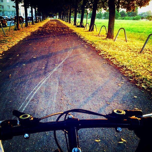 #instagram @atanamayanflaneuse Sıradan hayatı bu şekil olan bir şehirde yaşamayı nasip ettiğin için binlerce şükür sana Rabbim! #ifeelpriviliged #dresden #dresdenchronicles #cycling #bike #bicycle #velespit #bisiklet #baum #ağaç #ağaçlıyol #bäume #trees https://instagram.com/p/5R73MVioc6/ // my instagram https://instagram.com/wolkanca