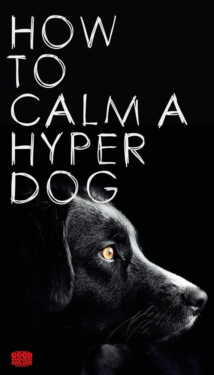 Simple Ways on How to Calm a Hyper Dog Hyper dog, Calm