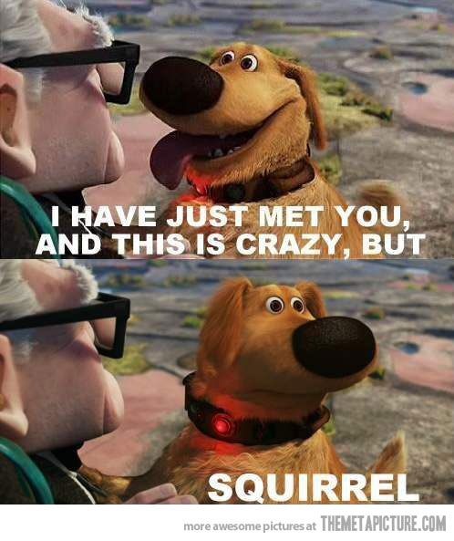 Me : Squirrels, Movies, Funny Stuff, Funnies, Humor, Disney, Dog