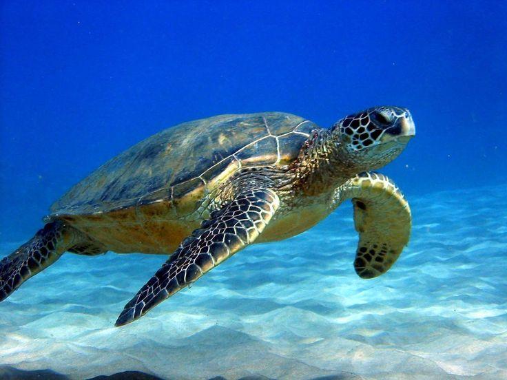 Resultado de imagen para fauna de costa rica en peligro de extincion
