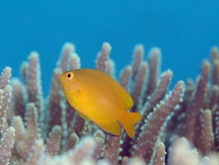 バリ島アメッドでダイビング/Bali Amed Diving