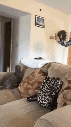 Geil wenn mein  Katze auch so wäre