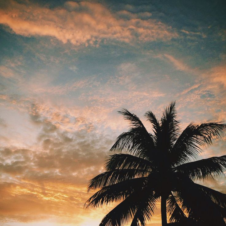 Coconuts & Sunsets