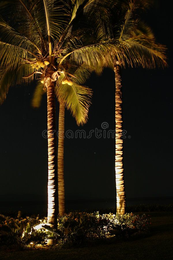 Palm Trees At Night A Small Grove Of Palm Trees Illuminated By