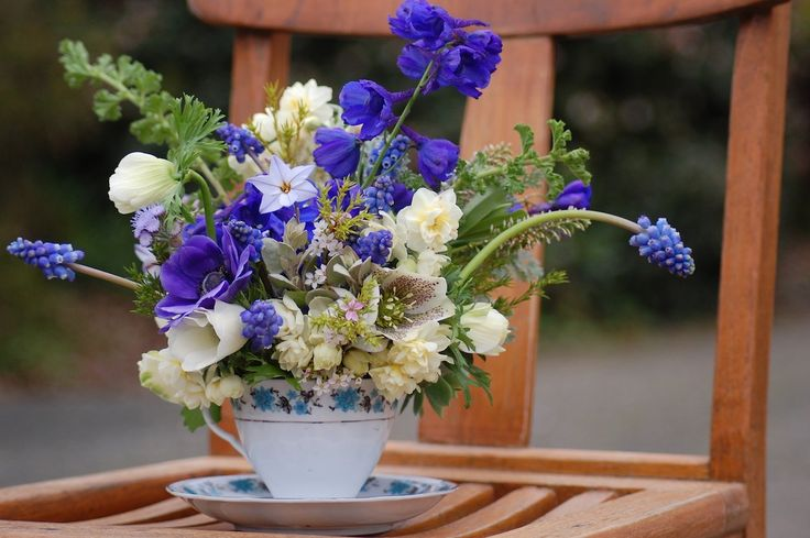 """Hopefully-spring-comes-soon-tea-cup-arrangement"" featuring Anemones, Grape Hyacinths, Jonquils, Delphiniums, Hellebore, flowering star grass that I don't know the name of, Ageratum, Lemon Geranium, golden Diosma, Saltbush, Hebe, Kale, Cypress, Bishop's Lace, some Succulent."