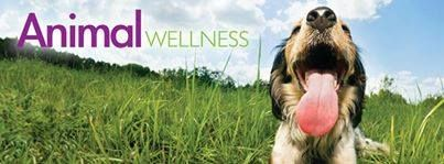 You Can Help - Subscribe to Animal Wellness Magazine and 40% of your subscription fee, comes to Happy Tails Rescue! Purchase their cookbook and $3 off each book is donated to HTR Use our unique code: AWA219 www.animalwellnes... www.animalwellnes... #HTR #happytailsrescue #dogrescue #maltese #bichonfrise #smallbreedrescue