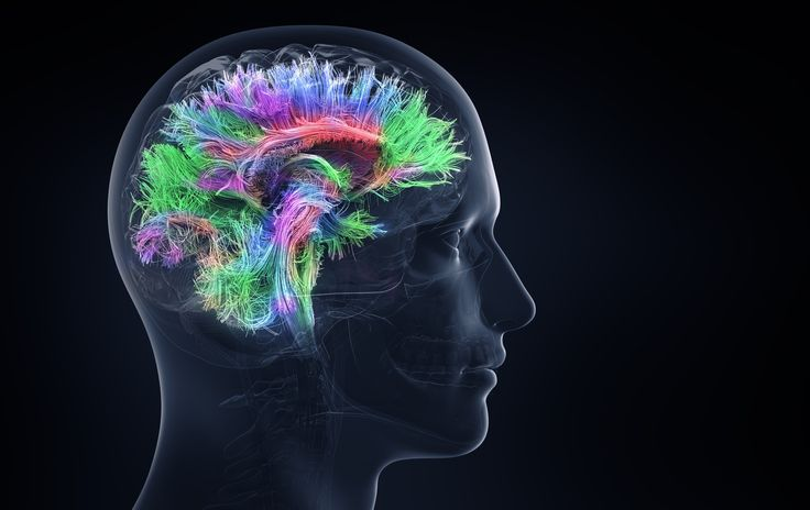 We've located the part of the brain which understands social interactions
