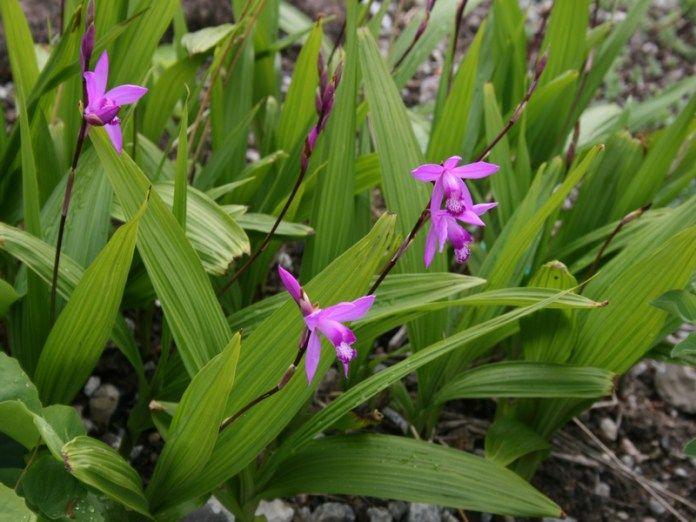 19 best Orchidées images on Pinterest | Pflanzen, Verstopfung und ...
