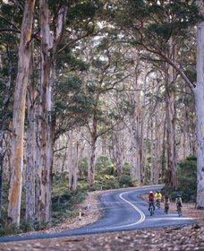 Boranup Karri Forest, Margaret River, Western Australia.