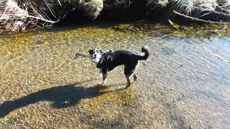Our lovely dog Chester enjoying the stream in Craik Forest on an unusually benign spring day. This photo breaks my heart, for we knew he was seriously ill, although he did not. He died shortly afterwards, but he loved this place. For all its beauty, I shall never return.