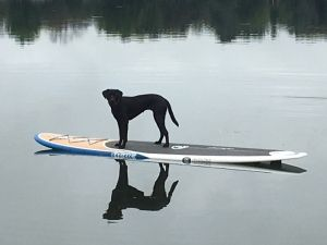 Check out my entry in Ottawa County's Top Dog Photo Contest.